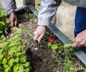 Nouveau ! Le jardin de Sidonie à Cholet