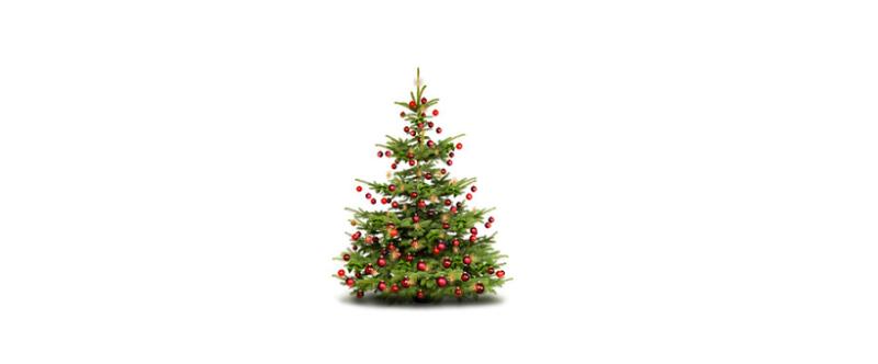 Sapin de Noël : L'Agitateur Floral assure la vente et l'après-vente !