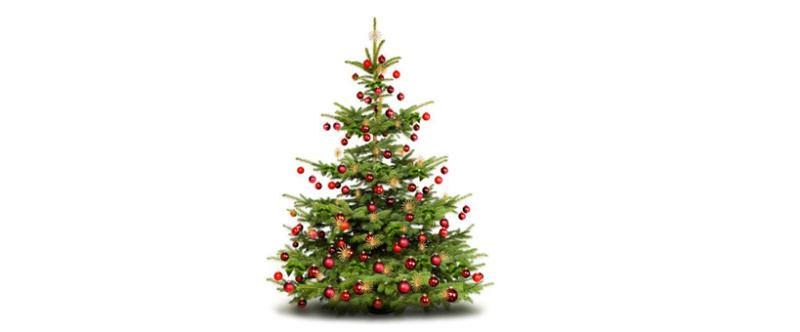 Avec l'Agitateur Floral, votre sapin de Noël sera solidaire !