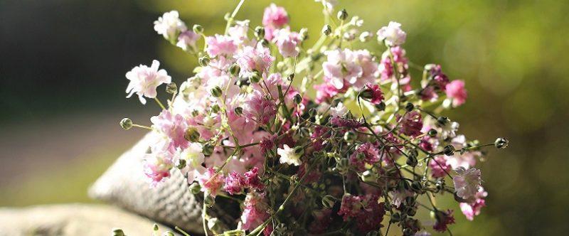 Offrir des fleurs : une belle façon de soutenir France Alzheimer !